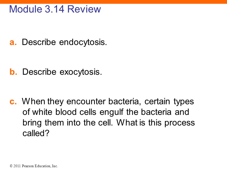 Module 3.14 Review a. Describe endocytosis. b. Describe exocytosis.