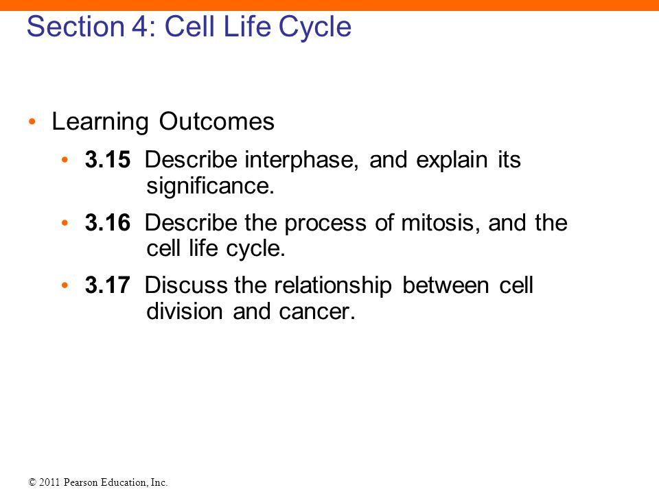 Section 4: Cell Life Cycle