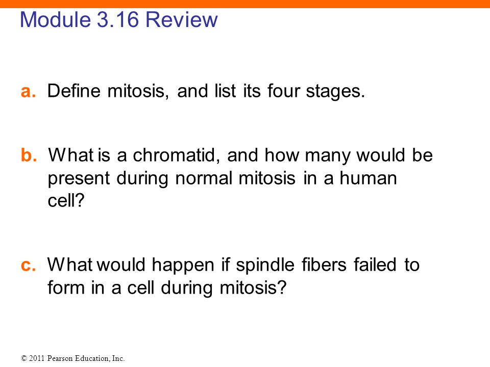 Module 3.16 Review a. Define mitosis, and list its four stages.