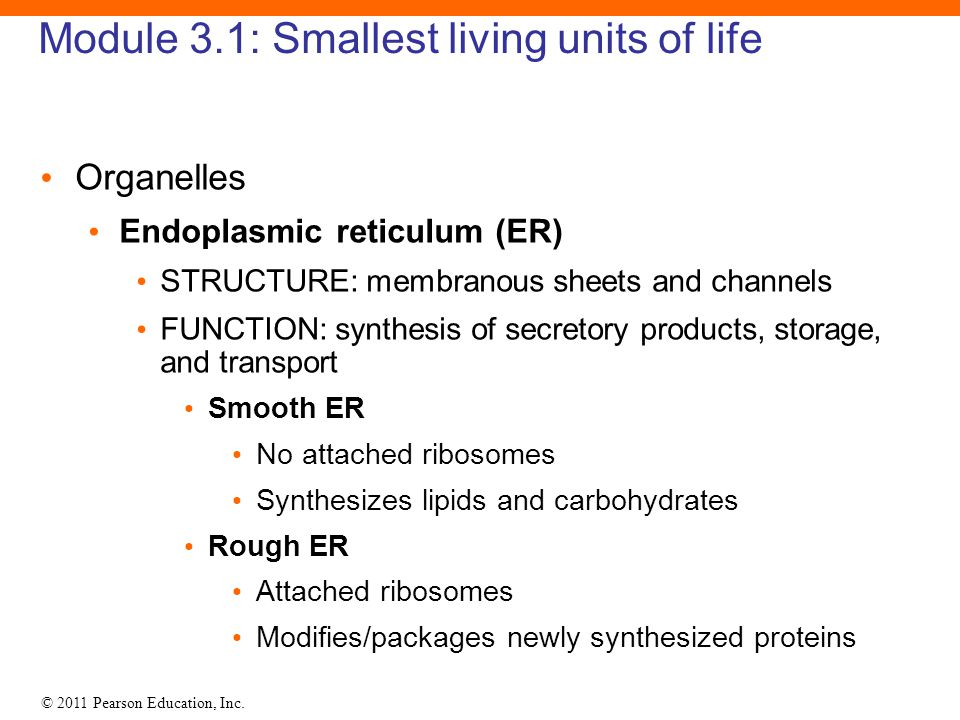 Module 3.1: Smallest living units of life
