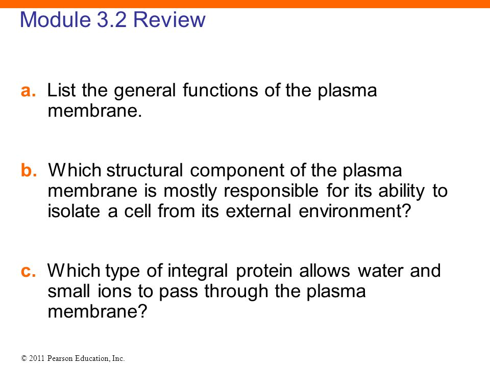 Module 3.2 Review a. List the general functions of the plasma membrane.