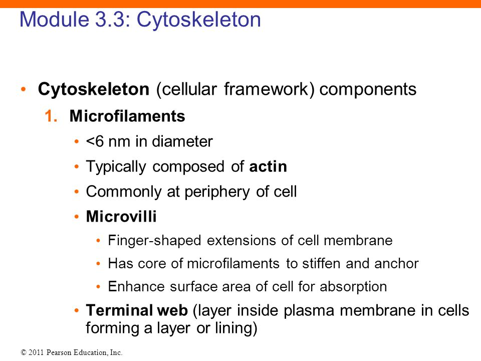 Module 3.3: Cytoskeleton Cytoskeleton (cellular framework) components