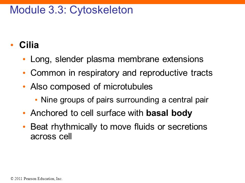 Module 3.3: Cytoskeleton Cilia
