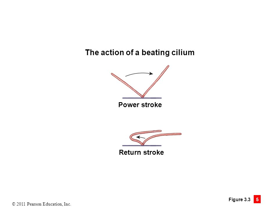 The action of a beating cilium