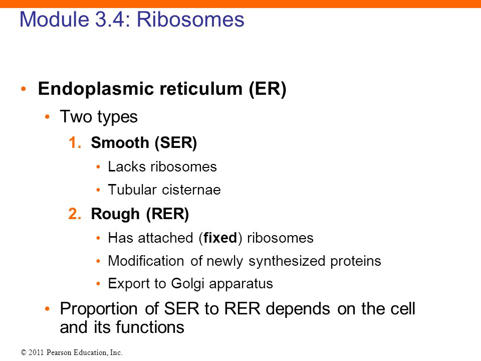 Module 3.4: Ribosomes Endoplasmic reticulum (ER) Two types