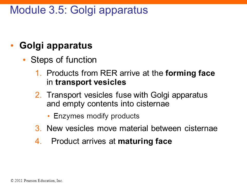 Module 3.5: Golgi apparatus