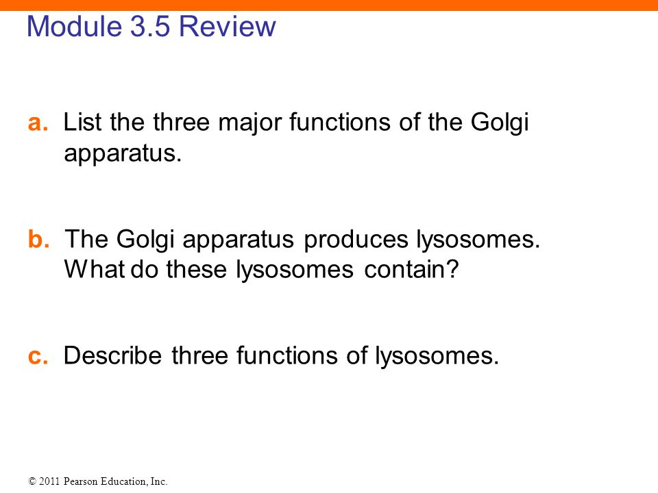Module 3.5 Review a. List the three major functions of the Golgi apparatus.