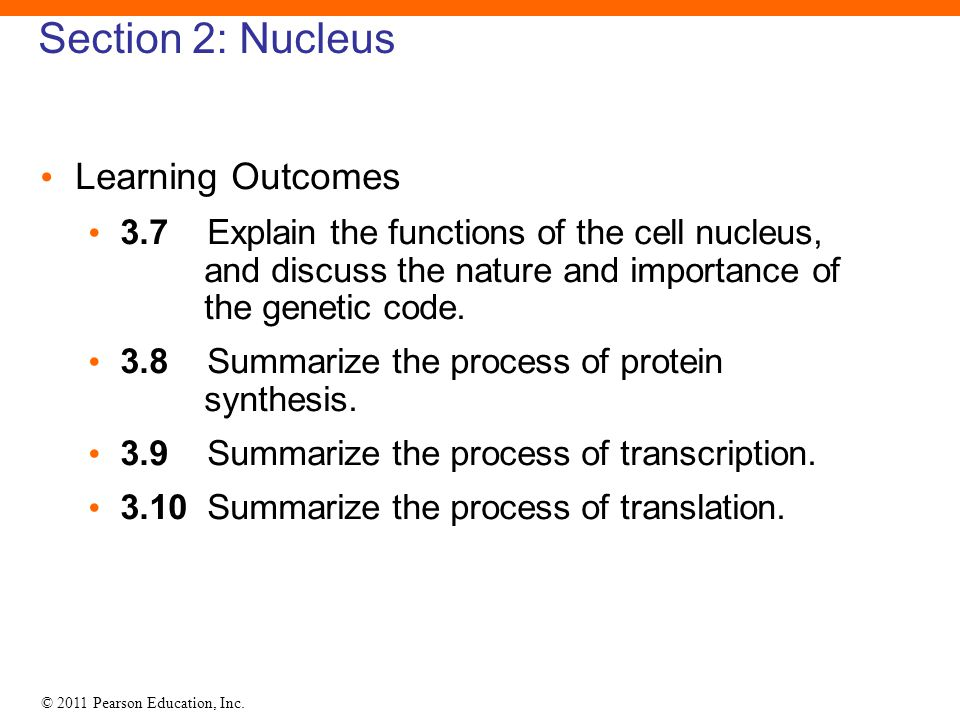 Section 2: Nucleus Learning Outcomes