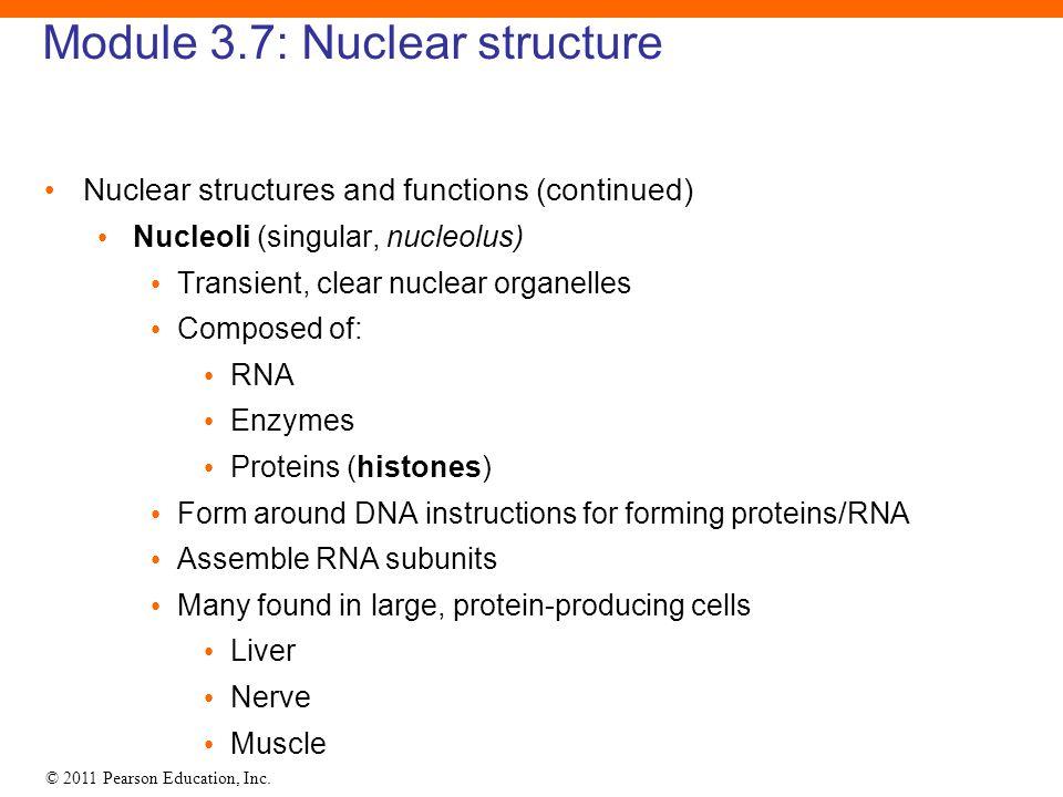 Module 3.7: Nuclear structure
