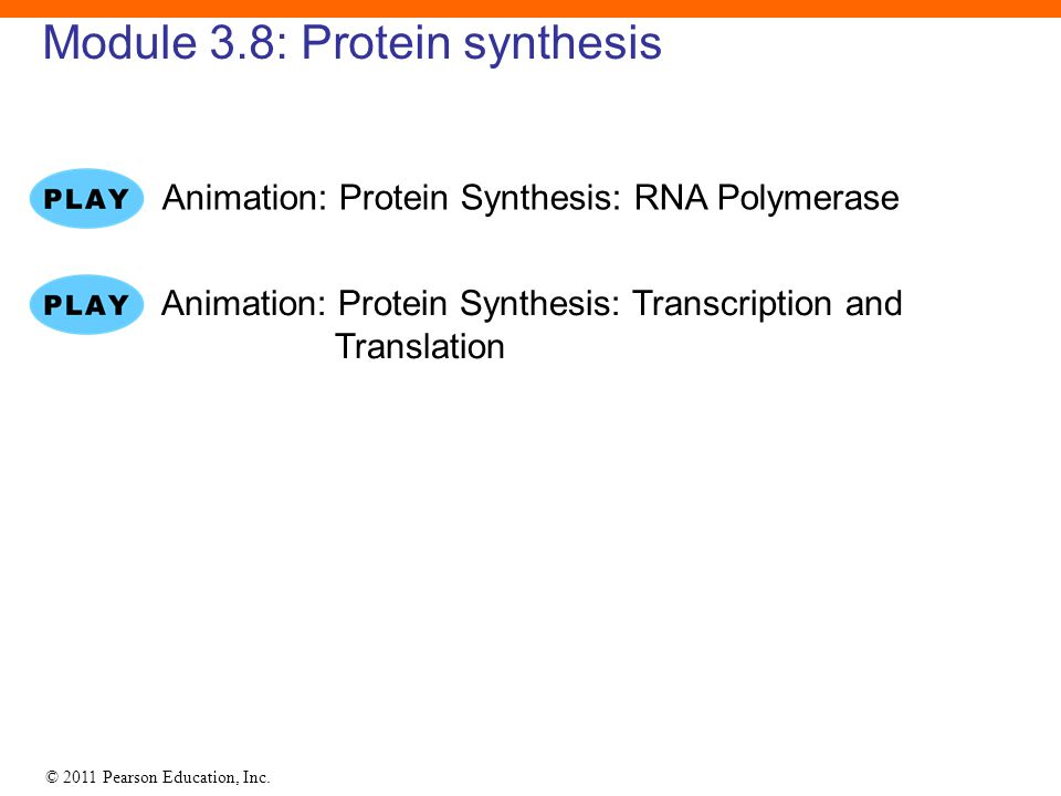 Module 3.8: Protein synthesis