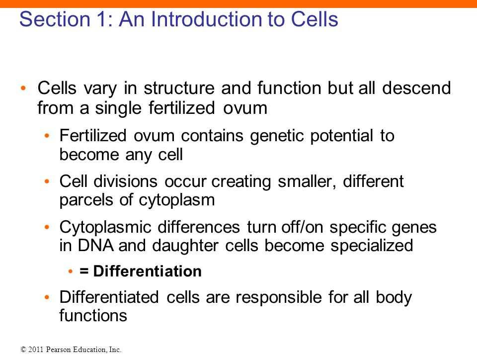 Section 1: An Introduction to Cells