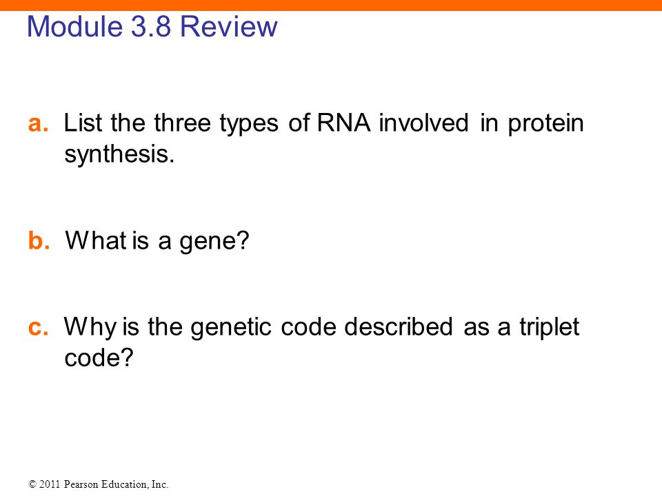 Module 3.8 Review a. List the three types of RNA involved in protein synthesis. b. What is a gene