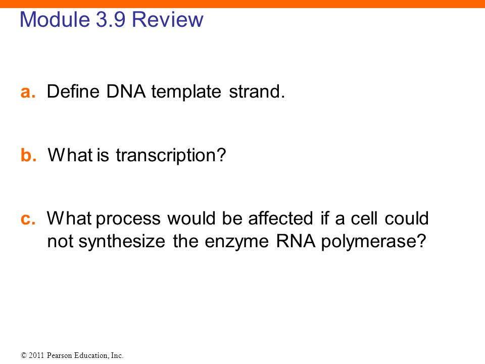 Module 3.9 Review a. Define DNA template strand.