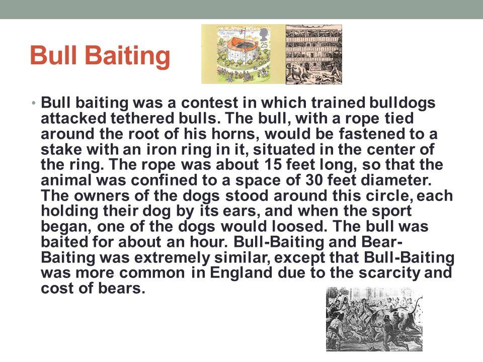 Bull Baiting