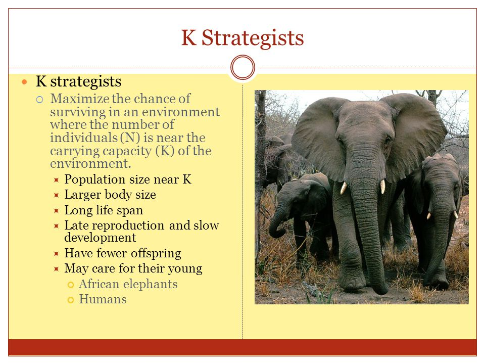 K Strategists K strategists