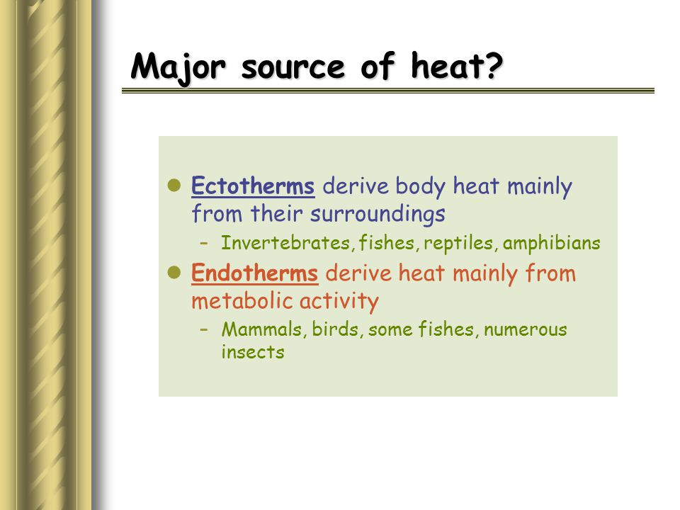 Major source of heat Ectotherms derive body heat mainly from their surroundings. Invertebrates, fishes, reptiles, amphibians.