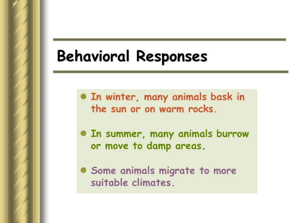 Behavioral Responses In winter, many animals bask in the sun or on warm rocks. In summer, many animals burrow or move to damp areas.