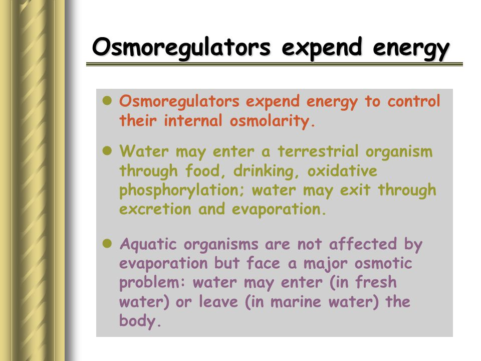 Osmoregulators expend energy