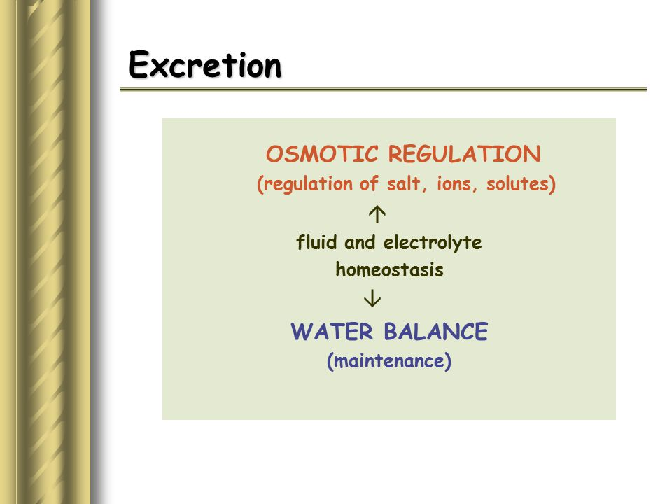 (regulation of salt, ions, solutes)