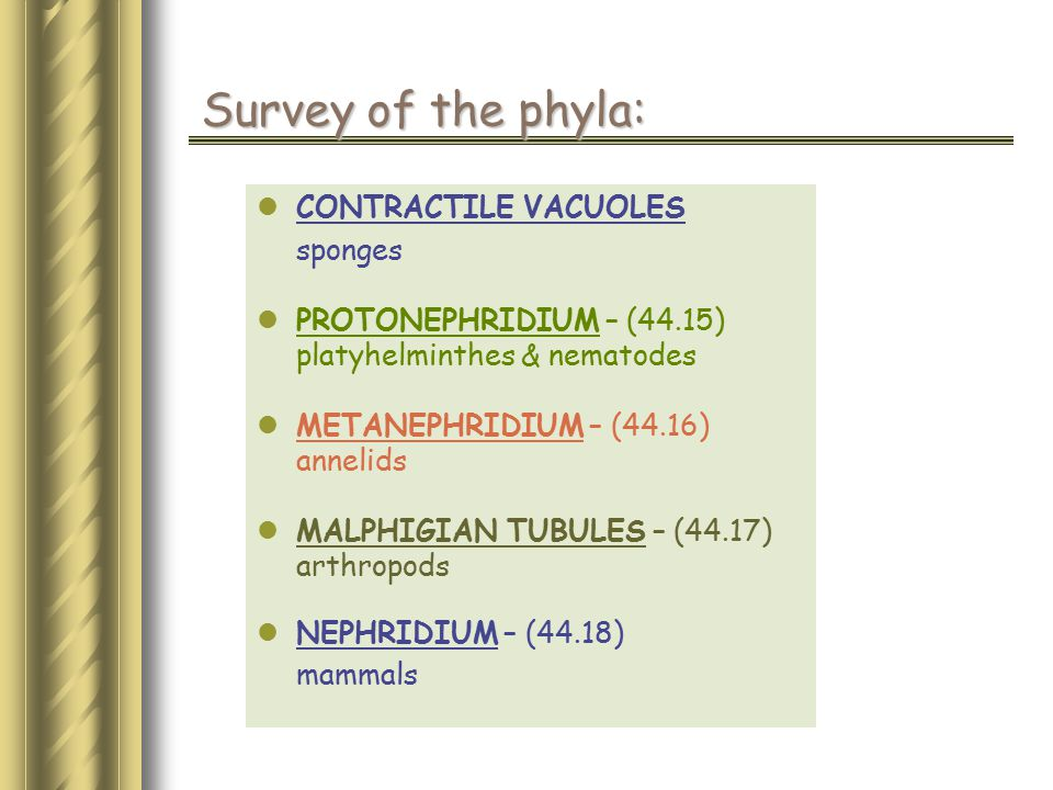 Survey of the phyla: CONTRACTILE VACUOLES sponges