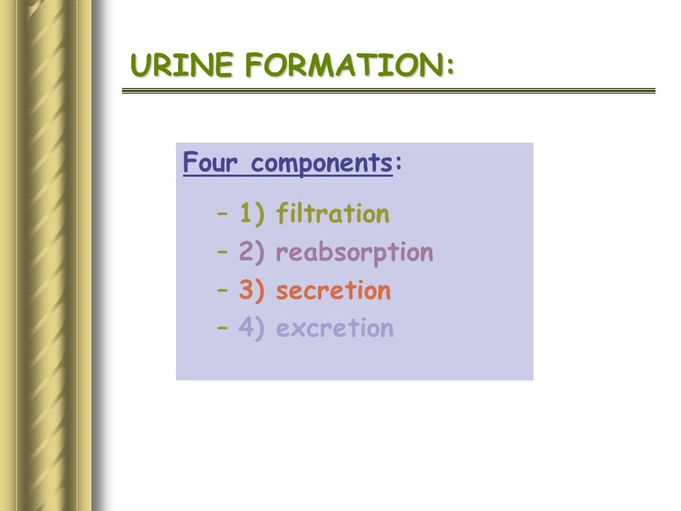 URINE FORMATION: Four components: 1) filtration 2) reabsorption