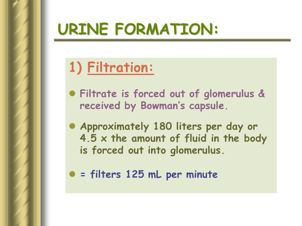 URINE FORMATION: 1) Filtration: