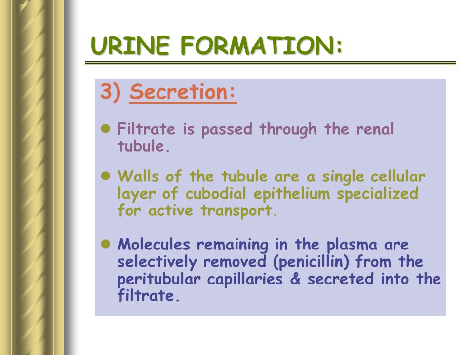URINE FORMATION: 3) Secretion: