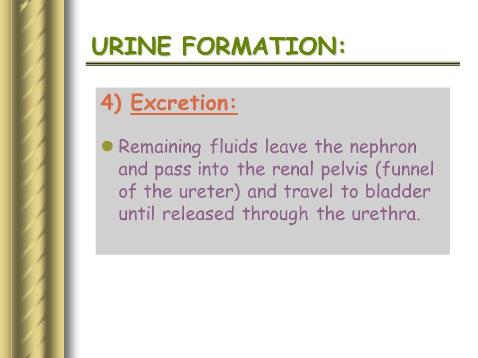 URINE FORMATION: 4) Excretion: