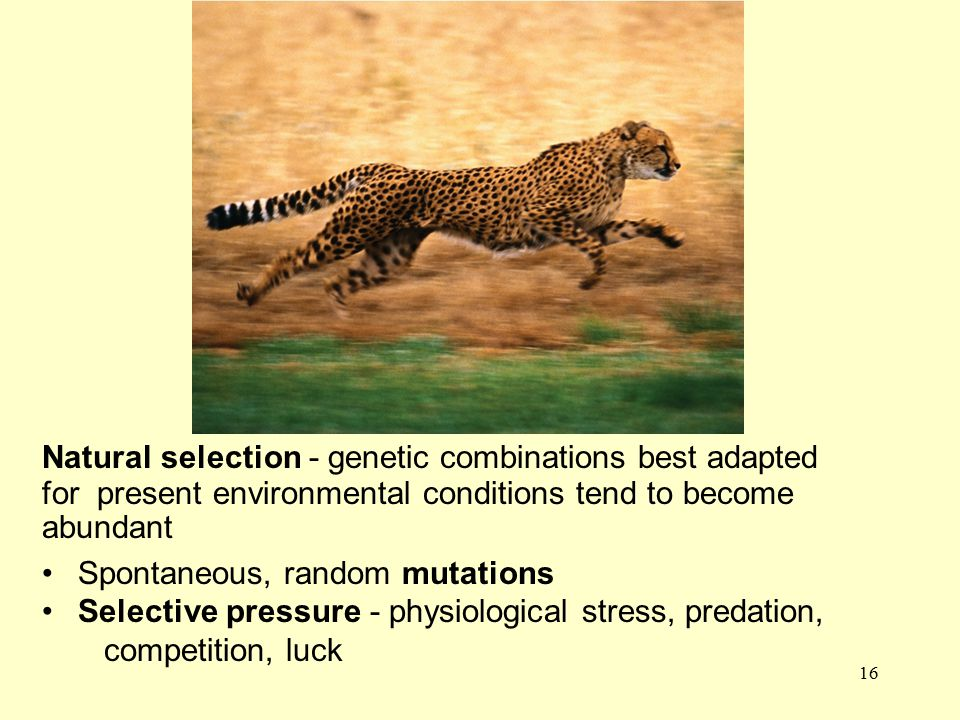 Natural selection - genetic combinations best adapted