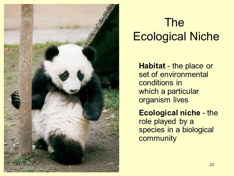 The Ecological Niche. Habitat - the place or set of environmental conditions in. which a particular organism lives.