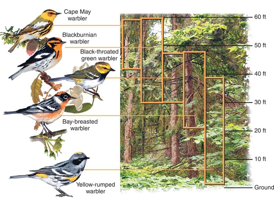 Here is an example of niches that birds might fill