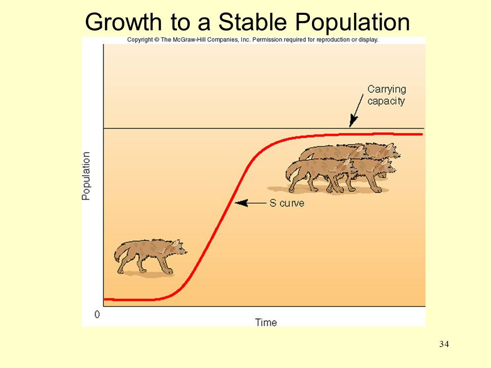 ADD FIG. 3.22 Growth to a Stable Population