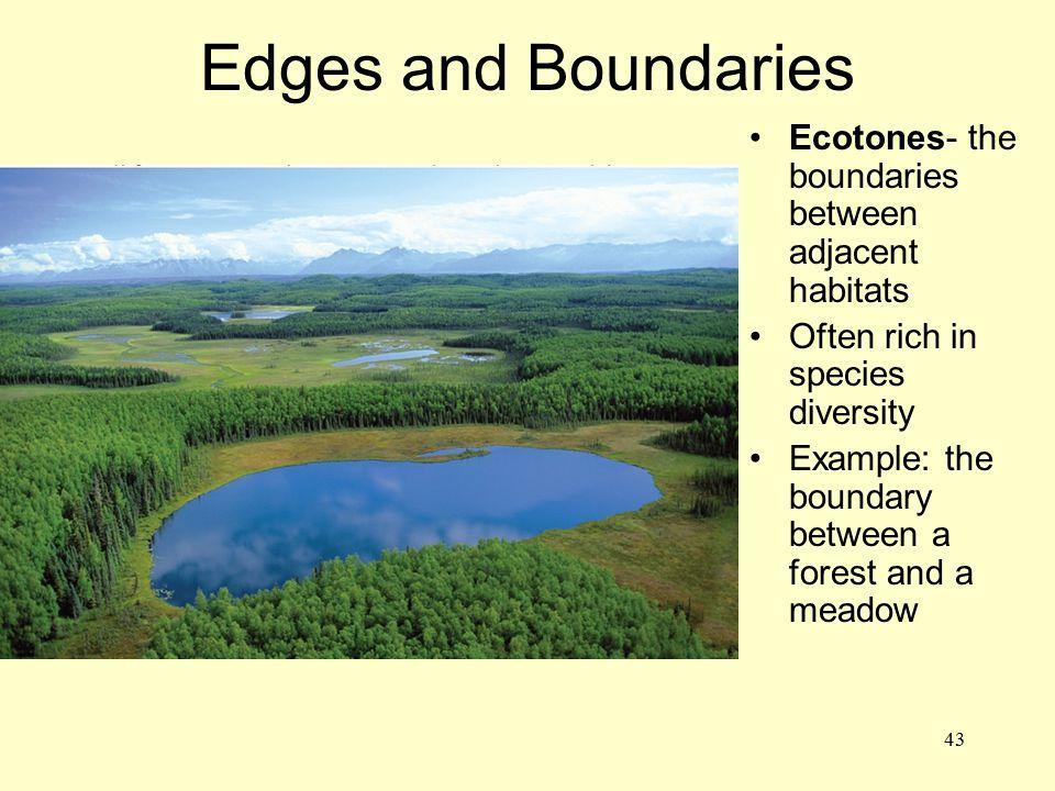 Edges and Boundaries Ecotones- the boundaries between adjacent habitats. Often rich in species diversity.