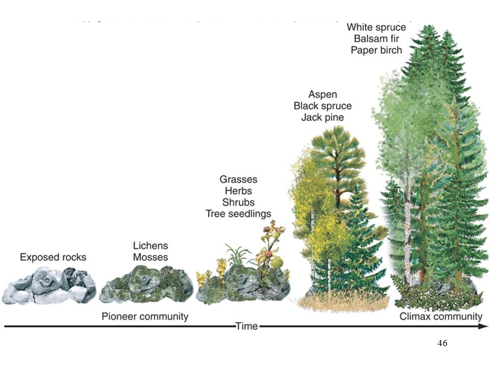 Primary Succession on Land