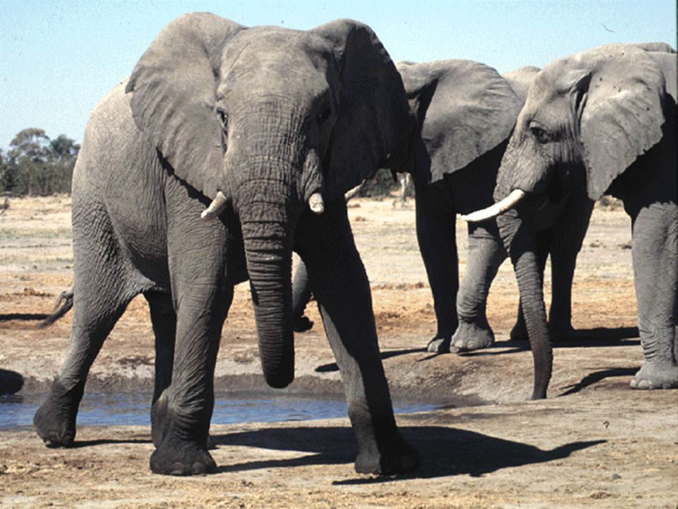 On the other hand, a hundred millions years ago, elephants did not exist.