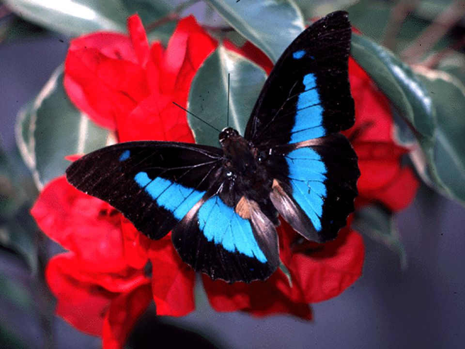 Notice the incredible expression of color in two species here, one a flower and the other a butterfly.