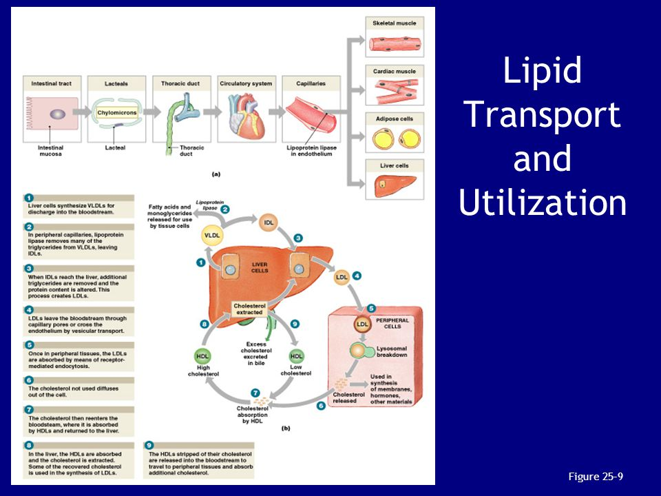 Lipid Transport and Utilization