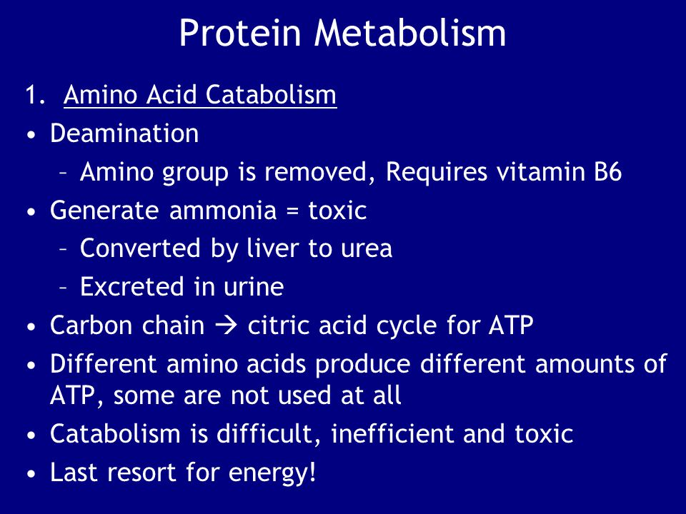 Protein Metabolism 1. Amino Acid Catabolism Deamination