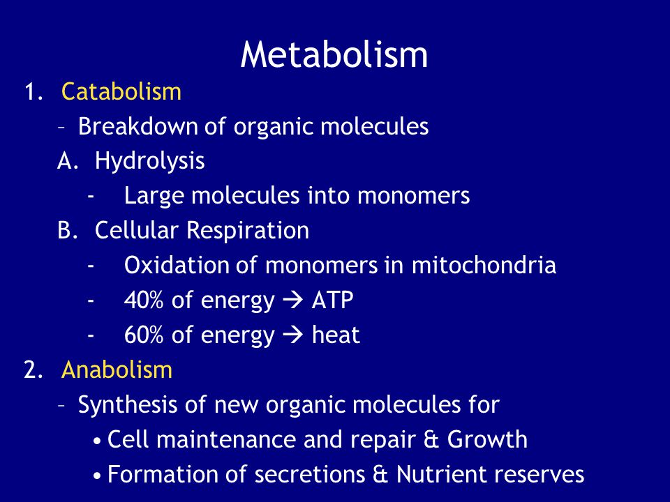 Metabolism Catabolism Breakdown of organic molecules Hydrolysis