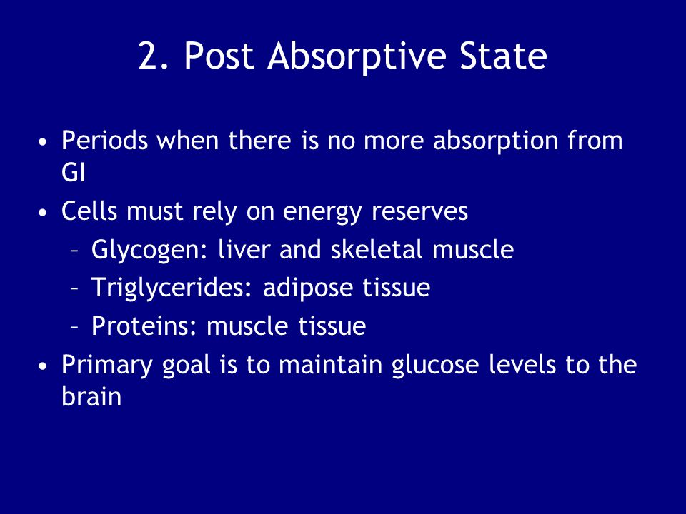2. Post Absorptive State Periods when there is no more absorption from GI. Cells must rely on energy reserves.