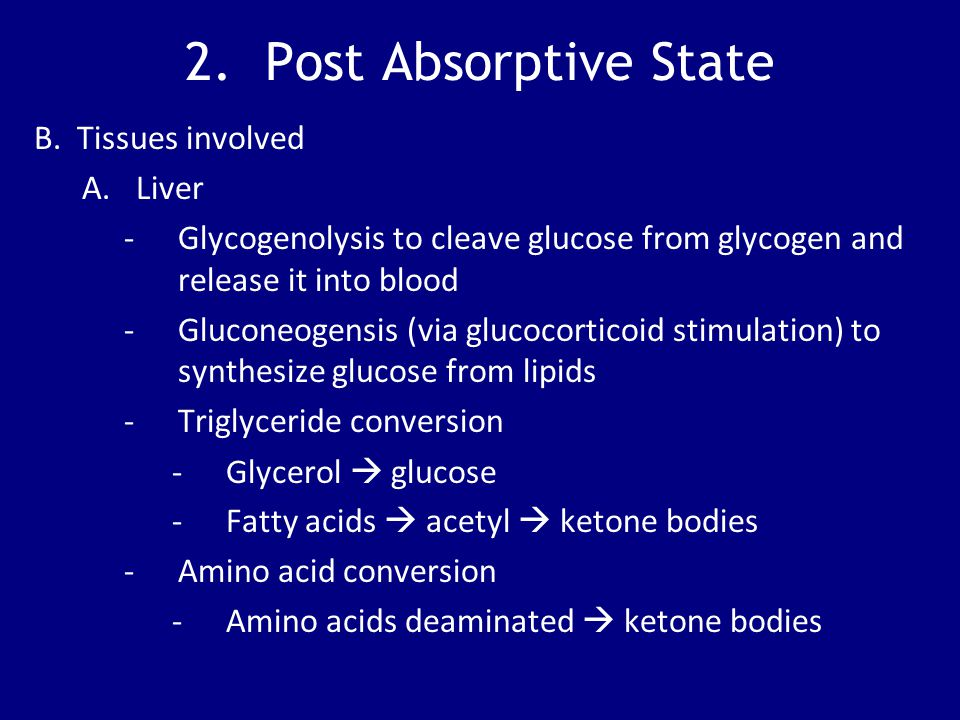 2. Post Absorptive State B. Tissues involved Liver