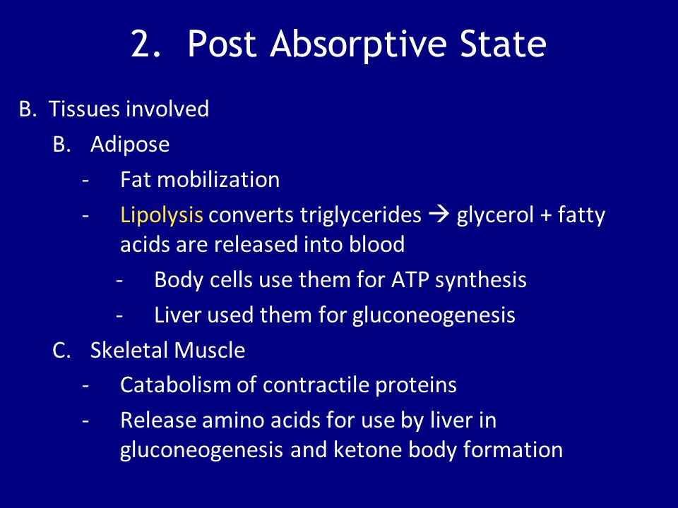 2. Post Absorptive State B. Tissues involved Adipose Fat mobilization