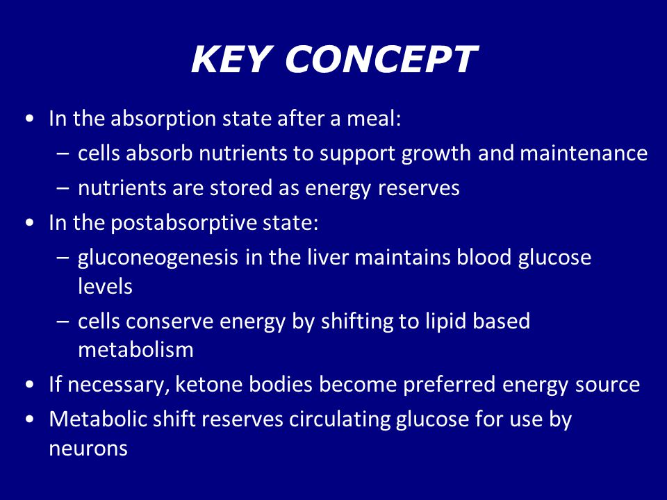 KEY CONCEPT In the absorption state after a meal: