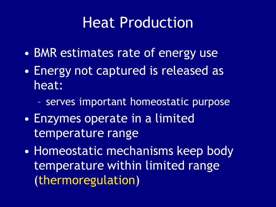 Heat Production BMR estimates rate of energy use