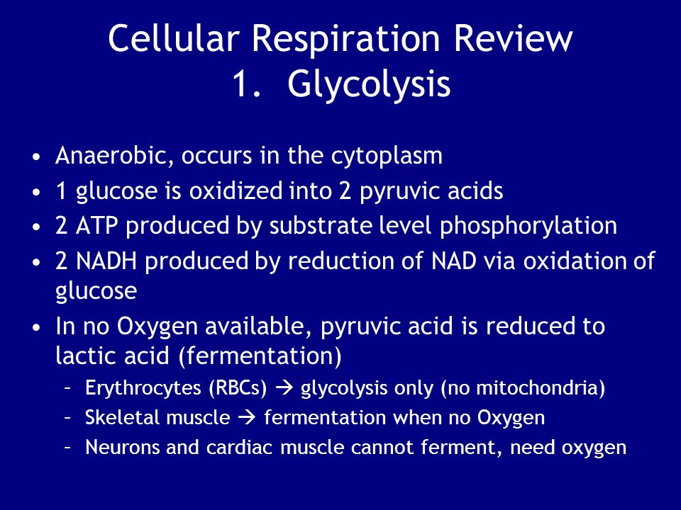 Cellular Respiration Review 1. Glycolysis