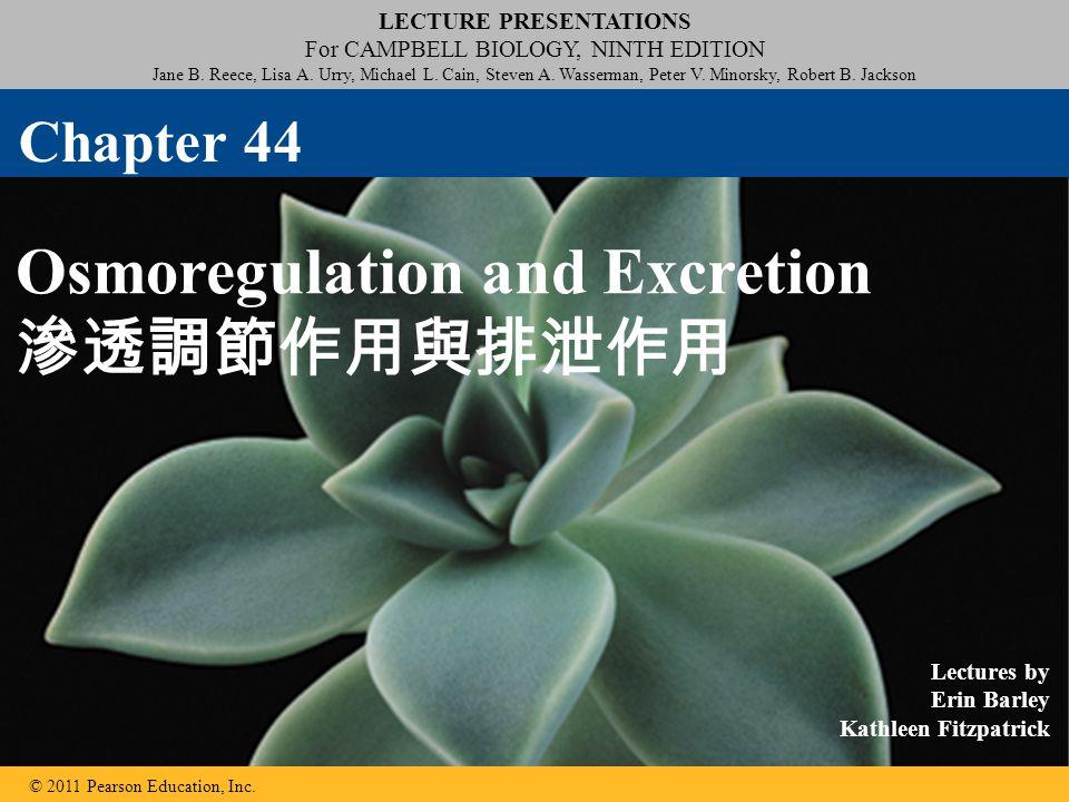 Osmoregulation and Excretion 滲透調節作用與排泄作用