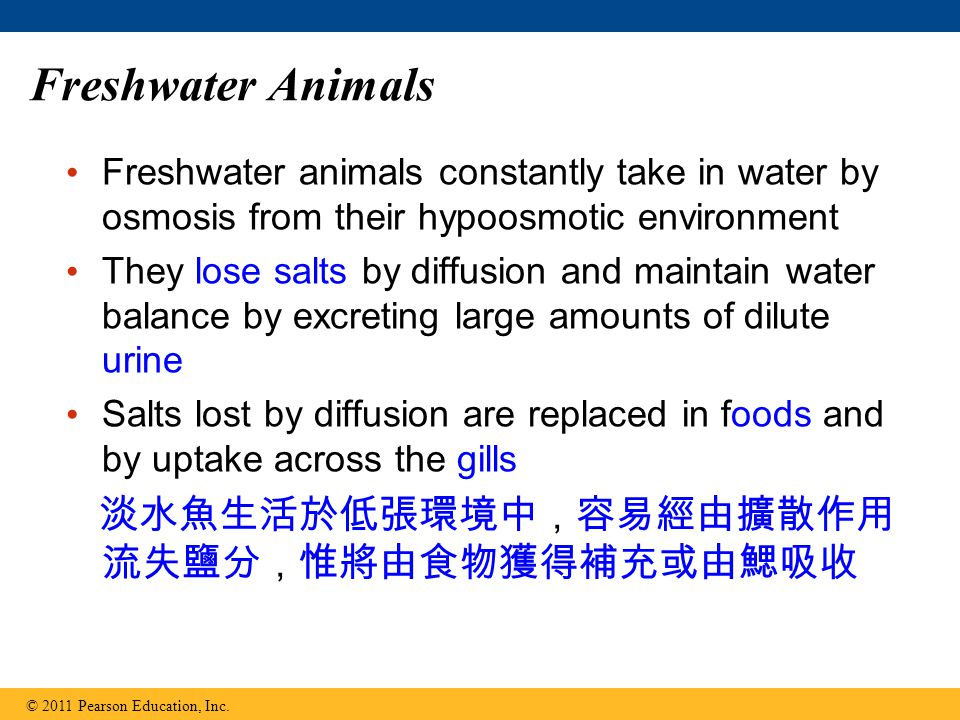 Freshwater Animals 淡水魚生活於低張環境中,容易經由擴散作用流失鹽分,惟將由食物獲得補充或由鰓吸收