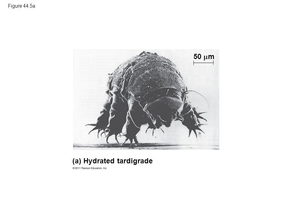 (a) Hydrated tardigrade
