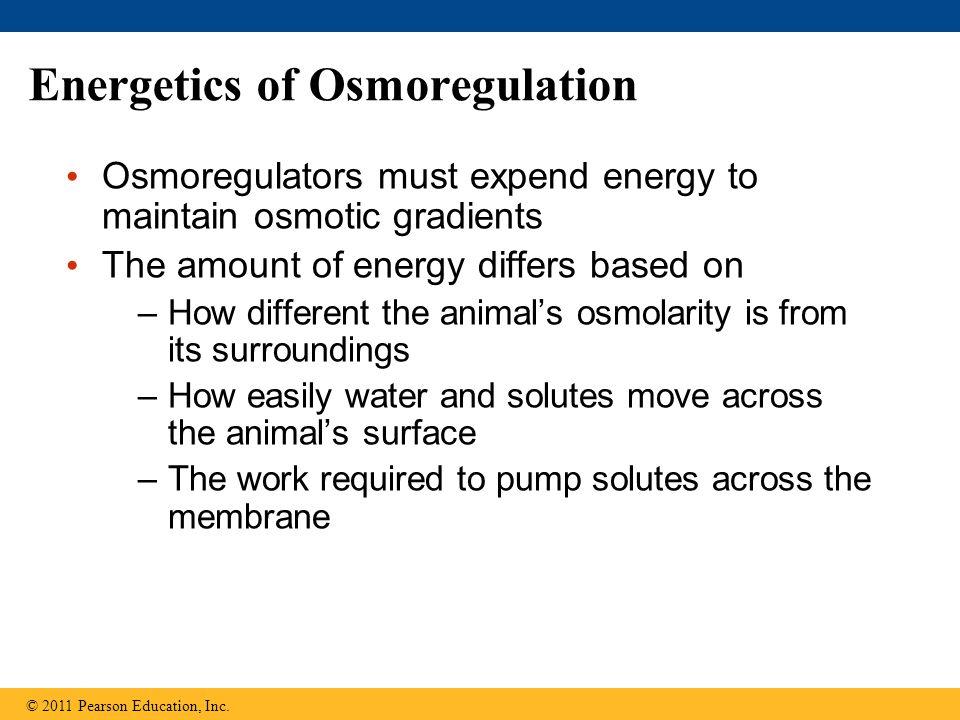 Energetics of Osmoregulation