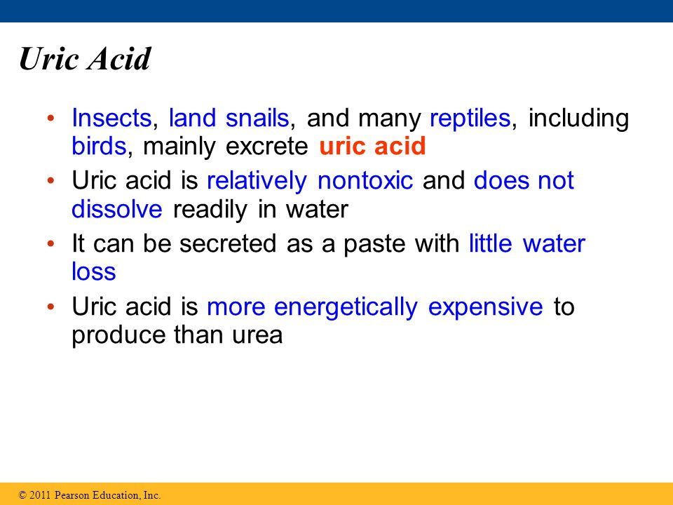 Uric Acid Insects, land snails, and many reptiles, including birds, mainly excrete uric acid.